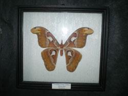 Выставка Бабочки мира